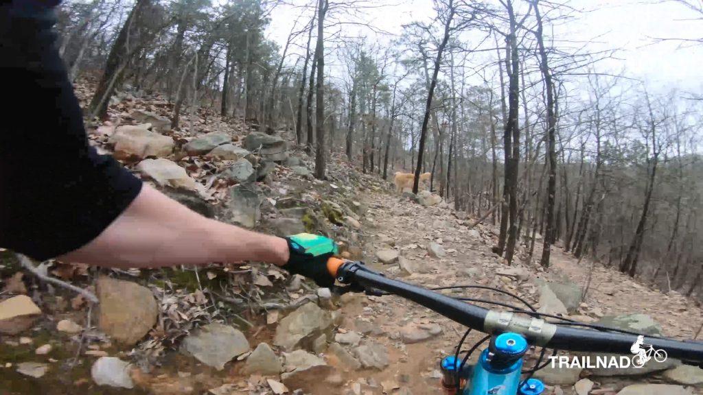 Talladega Trail