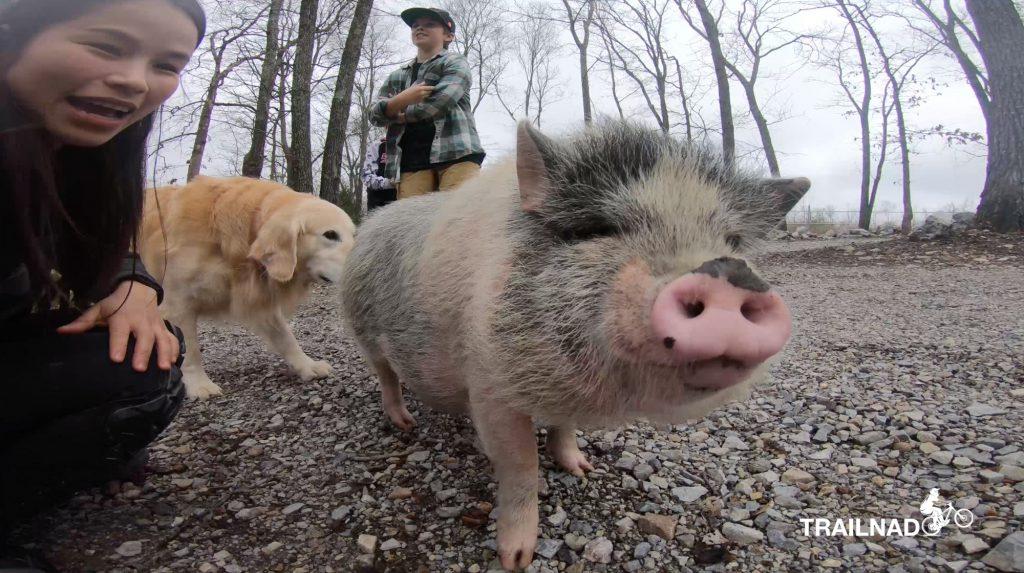Trail Pig at Anniston Trailhead